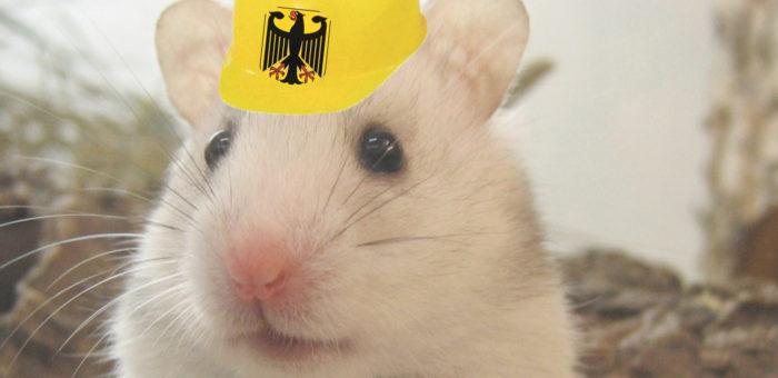 160822 Hamster